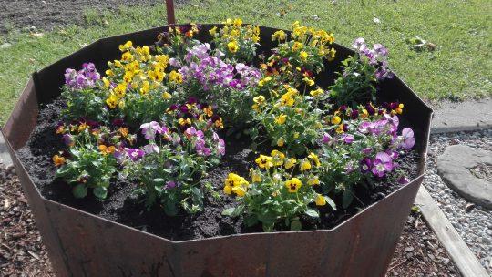 Sonnenschein und Blumenfreude
